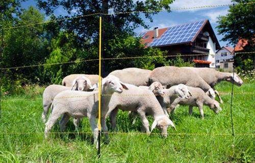 Síť pro ovce a elektrické ohradníky EasyNet, v.105cm, jednoduchá špička