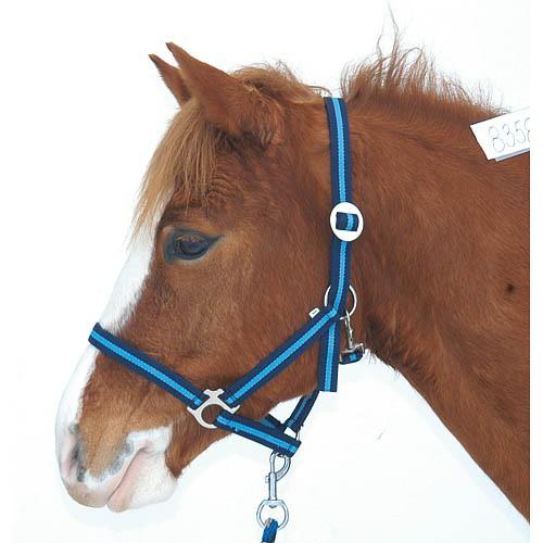 Ohlávka pro koně nylonová HIPPO, tmavě-světle modrá