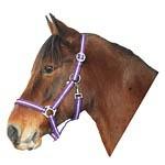 Ohlávka pro koně nylonová HIPPO, fialovo-růžová