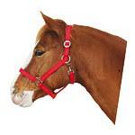 Ohlávka pro koně nylonová CLASSIC, červená