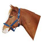 Ohlávka pro koně nylonová CLASSIC, modrá