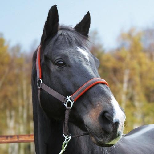Ohlávka pro koně nylon, DEXTER, podložená dvakrát stavitelná šedo-oranžová