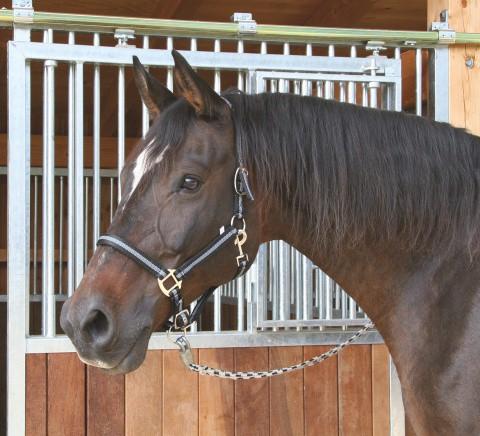 Ohlávka pro koně nylon, MUSTANG, podložená dvakrát stavitelná černá