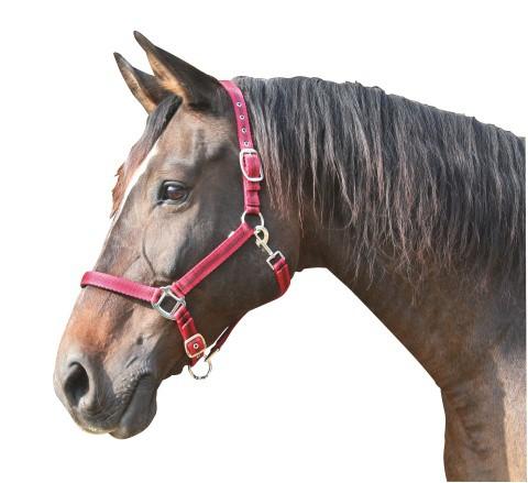 Ohlávka pro koně nylon, MUSTANG, podložená dvakrát stavitelná vínová