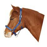Ohlávka pro koně nylon, MUSTANG, podložená dvakrát stavitelná modrá