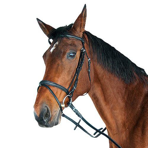 Uzdečka pro koně podložená, na chladnokrevníka + otěže, černá