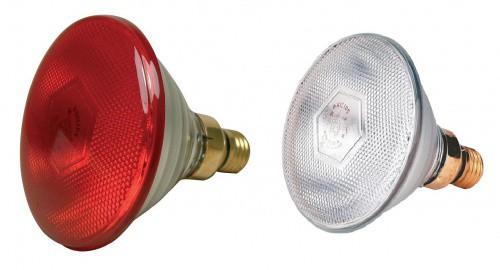 Infražárovka PHILIPS PAR 100  / 175W, červená / čirá