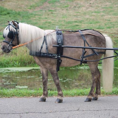 Postroj na koně STAR, pony, černý