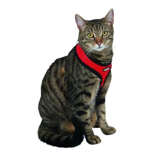 Postroj pro kočky, červený