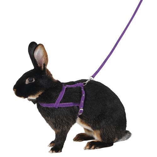 Postroj pro králíky pro agility